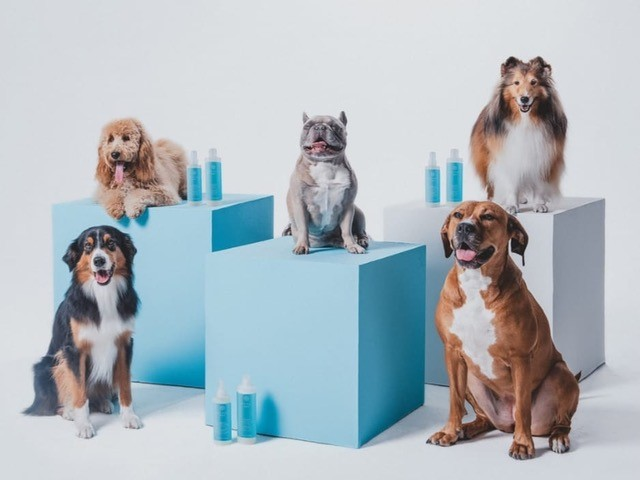 Photo of 5 super cute dogs posed next to Monat pet shampoo bottles.